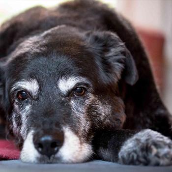Altersgerechte Behandlung von Haustieren – Kongressbesuch